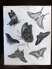 Rees 1820 Antique Print. Papilio, Swallowtail Butterfly